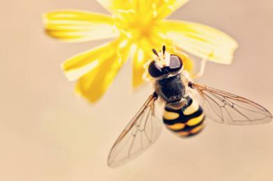 Wodzisław Śląski z tytułem Gminy Przyjaznej Pszczołom